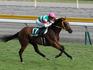 20130825_Niigata_Nisai_Stakes_(G3).jpg